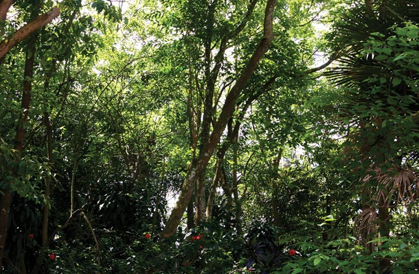 Jardim Climax